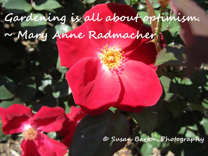 Gardening is All About Optimism Flower Photo (2)